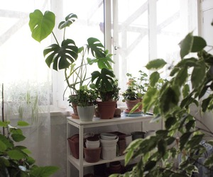 basic, plants, and pale image