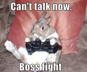 rabbit, funny, and bunny image