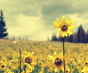 flores, flower, and girasol image