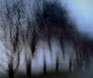 pale and trees image