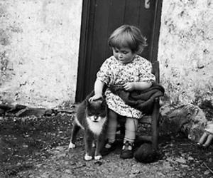 pet cat and cute image