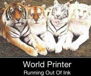 animal, funny, and tiger image