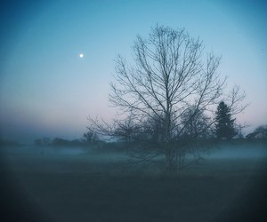 tree, moon, and nature image