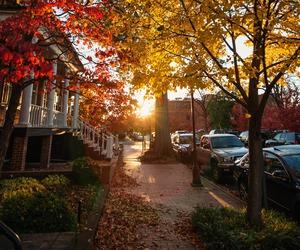 fall, autumn, and nature image