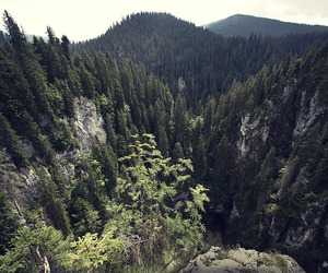forest, high, and mountains image