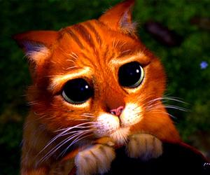 cat, shrek, and eyes image