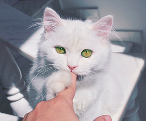 cat, cute, and green eyes image