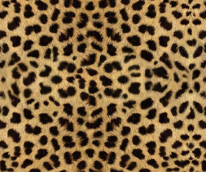 animal print, wallpaper, and leopard image