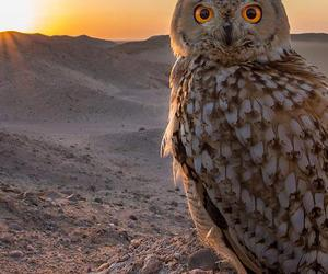 beauty and owl image