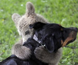 bear, dog, and hug image