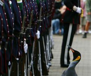 cool, penguin, and soldier image