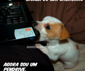 dog, cute, and guerradoamor image