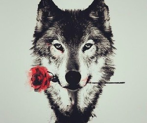 bmth and wolves image