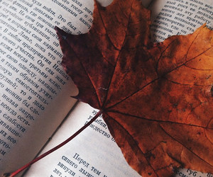 autumn, book, and chill image