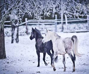 animals, beautiful, and cold image