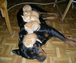 kitten, cat, and dog image