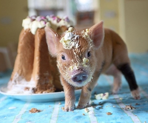 baby animals, cute animals, and piglet image