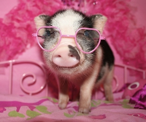 pig, pink, and piglet image