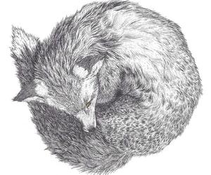 art, draw, and fox image