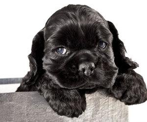 black, dog, and sweetheart image