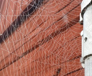 cool, nature, and spider image