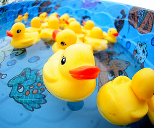 duck, photography, and pool image