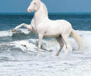 horse, beach, and white image