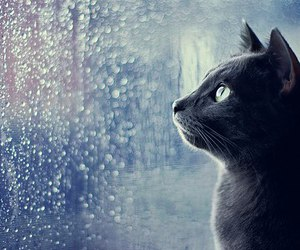 cat, rain, and black image