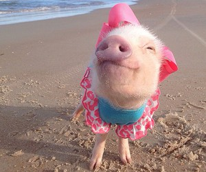 pink, pig, and piggy image