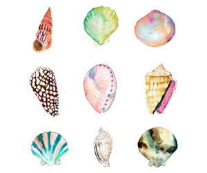 background, shell, and colors image