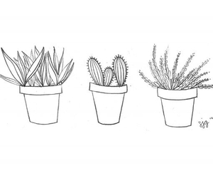 plants, cactus, and drawing image