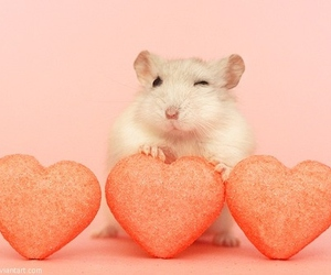 cute, mouse, and heart image