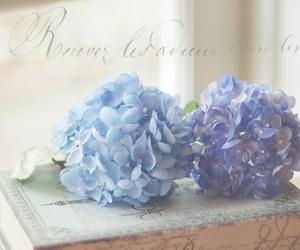 blue, natural light, and paris image