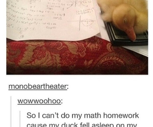 duck, homework, and funny image