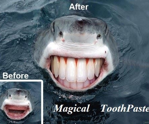 funny, shark, and smile image