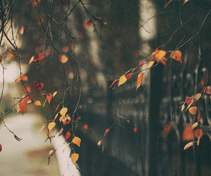 autumn, leaves, and pretty image