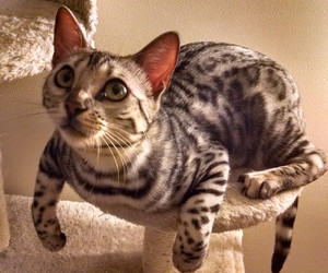 cat, coloring, and stripes image