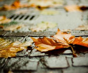 leaves, autumn, and rain image