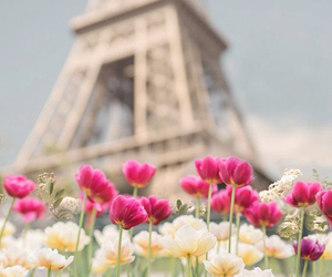 eiffel tower, paris, and flowers image