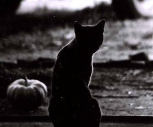 cat and pumpkin image