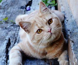 cat, animal, and feline image