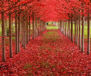 beautiful and trees image