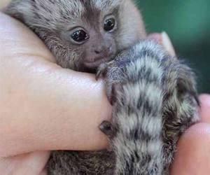 animal, monkey, and baby image