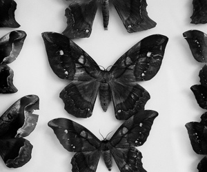 butterfly, black and white, and photography image