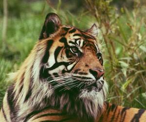 animal, beautiful, and royal image