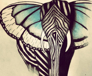 elephant, butterfly, and zebra image