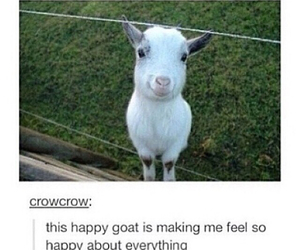 goat, happy, and funny image