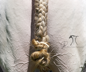 braid, equine photography, and equestrian image