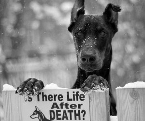 dog, funny, and death image