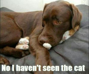 cat, dog, and fun image